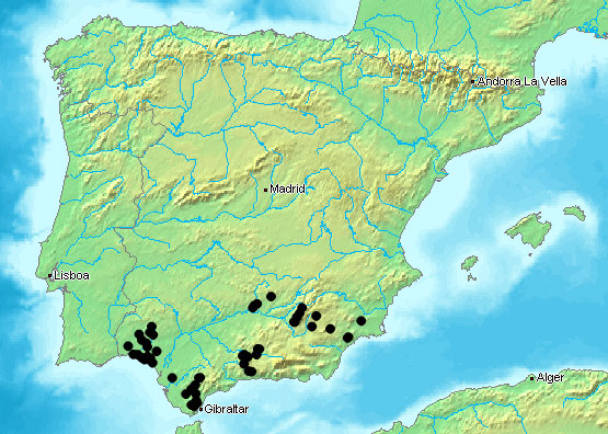 Map Of Spain Andalucia.Herpetofauna Of Europe S Spain April 2006
